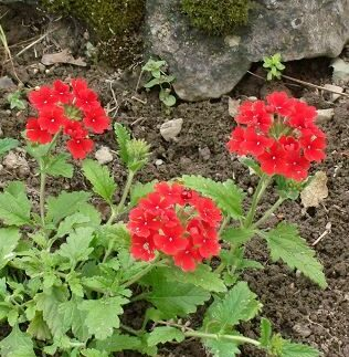 3 fleurs